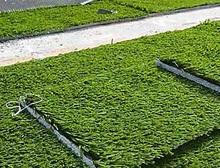 Штучний газон  переваги і застосування 256472a60e973