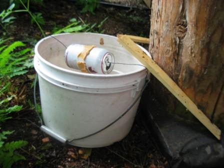 Саморобна пастка для мишей і щурів допоможе вивести гризунів