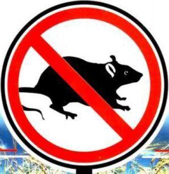 Боротьба з мишами і щурами на дачній ділянці обов'язково має бути комплексною