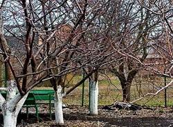 Осінній догляд за плодовими деревами 0462e57bdf9dc