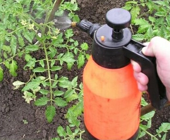 догляд за помідорами